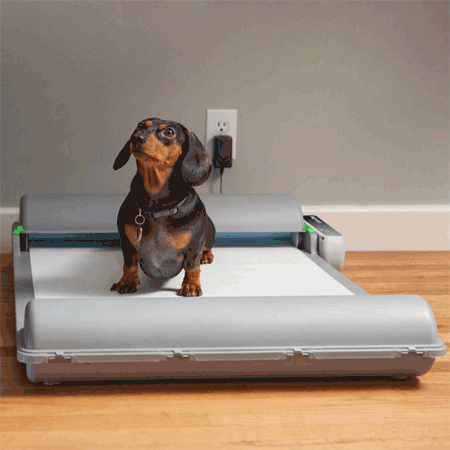 Automatic Indoor Dog Potty